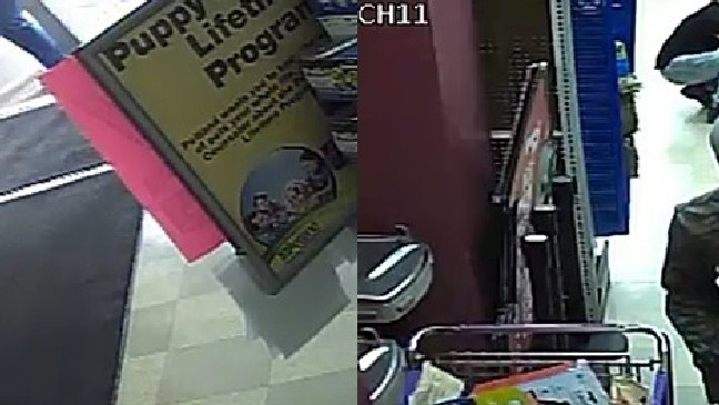 Crime Stoppers: Thieves steal $4,000 puppy from Bethel Road