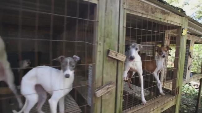 12 Ohio puppy mills on Humane Society's list of the